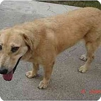 Adopt A Pet :: Shelley - Kingwood, TX