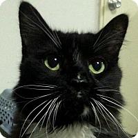 Adopt A Pet :: Gizmo - Winchester, CA