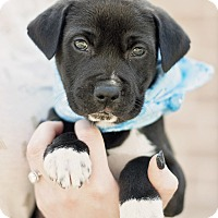 Adopt A Pet :: Coal - Houston, TX