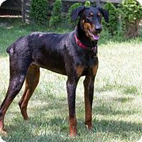 Adopt A Pet :: SHERLO