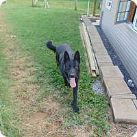 Adopt A Pet :: Jett - Greeneville, TN