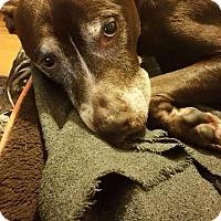 Adopt A Pet :: Howard - Dayton, OH