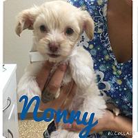 Adopt A Pet :: Noony - Brea, CA