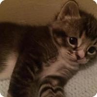 Adopt A Pet :: Neptuna 160124 - Atlanta, GA