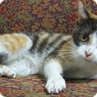 Adopt A Pet :: Elsa - Gary, IN