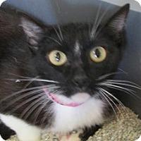 Adopt A Pet :: GWENETH - Aiken, SC