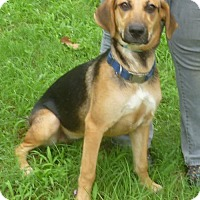 Hound (Unknown Type) Mix Dog for adoption in Livingston, Texas - Meadow