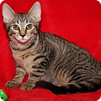 Adopt A Pet :: Courtney (Spayed) - Marietta, OH