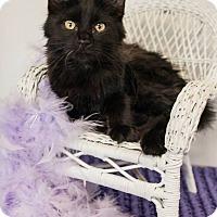 Adopt A Pet :: Kayak - Muskegon, MI