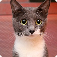 Adopt A Pet :: Prego - Sarasota, FL