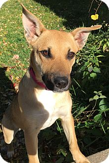 Shepherd (Unknown Type) Mix Dog for adoption in Grand Rapids, Michigan - Winnie