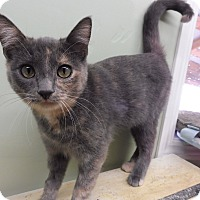 Adopt A Pet :: Ivy - Creston, BC