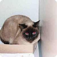 Adopt A Pet :: *SHADOW* - Salt Lake City, UT