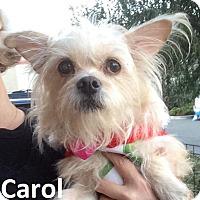 Adopt A Pet :: Carol - Lake Forest, CA