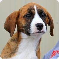 Adopt A Pet :: Heather - Glastonbury, CT