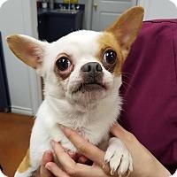Adopt A Pet :: Cumbia - College Station, TX