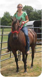 Quarterhorse for adoption in Dewey, Illinois - Molly (the QH)