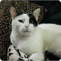 Adopt A Pet :: Sasha - House Springs, MO