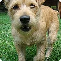 Adopt A Pet :: Umee - Staunton, VA