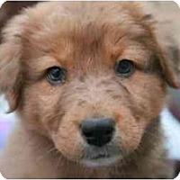 Adopt A Pet :: Twix - Richmond, VA