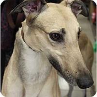 Adopt A Pet :: Jackson - Philadelphia, PA