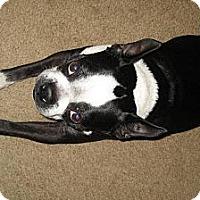 Adopt A Pet :: Brutus - Temecula, CA