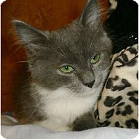 Adopt A Pet :: Minnie Mae - Brea, CA