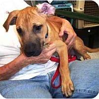 Adopt A Pet :: Lumpy - Scottsdale, AZ