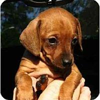 Adopt A Pet :: Shona - Kingwood, TX
