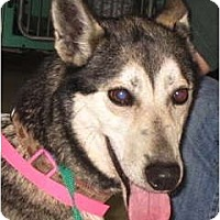 Adopt A Pet :: Penny - Kettle Falls, WA
