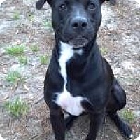 Adopt A Pet :: Baloo - Gainesville, FL