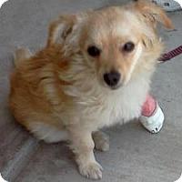 Adopt A Pet :: Mira - Long Beach, CA