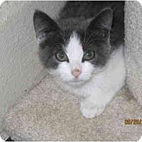 Adopt A Pet :: Bing - Catasauqua, PA