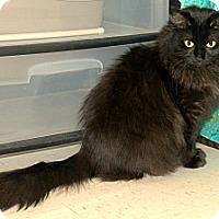 Adopt A Pet :: Tabitha - Plainville, MA