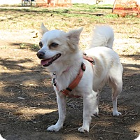 Adopt A Pet :: Must love Hugs & Kisses! - Los Angeles, CA