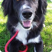 Adopt A Pet :: Don Juan - Lake Odessa, MI