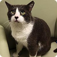 Adopt A Pet :: Haskell - Gilbert, AZ
