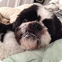 Adopt A Pet :: Levi - Wilmington, DE
