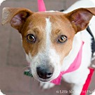 Adopt A Pet :: Charlotte (Has Application)