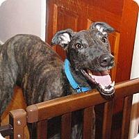 Adopt A Pet :: Rhino - Ware, MA