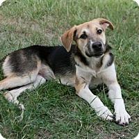 Adopt A Pet :: Jenna - Lufkin, TX