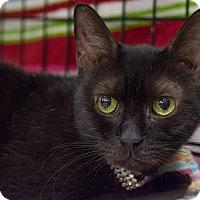 Adopt A Pet :: Kitty Baby - New York, NY