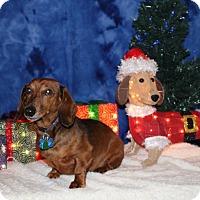 Adopt A Pet :: Louie - Marcellus, MI