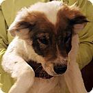 Adopt A Pet :: Susan's Pup Ranger