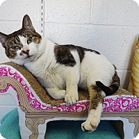 Adopt A Pet :: Daisy 'BBF' - Mt Vernon, NY