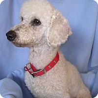 Adopt A Pet :: SugarPlum - Yucaipa, CA