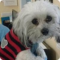 Adopt A Pet :: Jax - LEXINGTON, KY