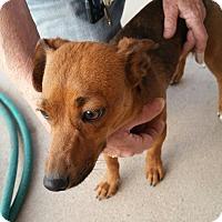 Adopt A Pet :: Peaches - Tucson, AZ