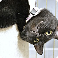Adopt A Pet :: Tennessee - New Richmond,, WI