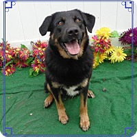 Adopt A Pet :: LOKI- also see ONO - Marietta, GA